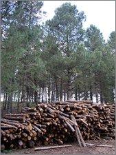 Papel, madera y cambio climático