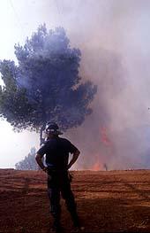 Incendios forestales, necesidad de una estrategia global